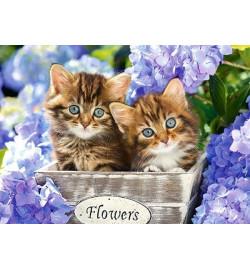 Пазлы Castorland 60 эл. Милые котята