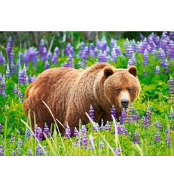 Пазлы Castorland 120 midi эл. Медведь на лугу